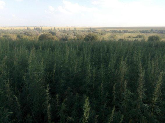За півроку поліцейські припинили на Донеччині понад 1400 наркозлочинів , фото-2