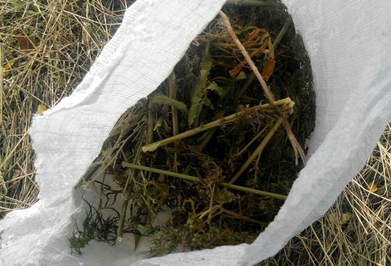 У Покровській оперзоні із незаконного обігу правоохоронцями вилучено більше 16 кг наркотичних речовин, фото-1