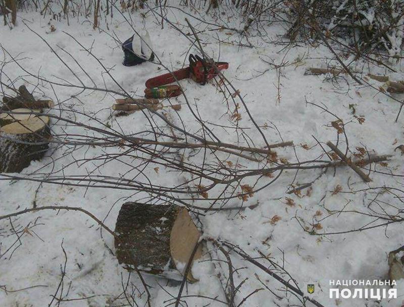 Добропільські поліцейські припинили незаконну вирубку дерев, фото-1