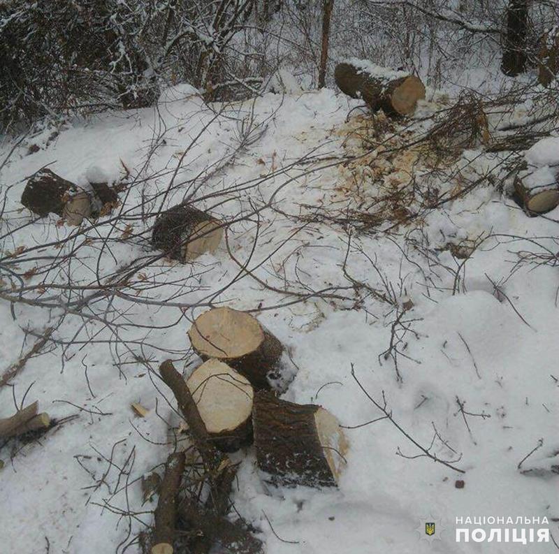 Добропільські поліцейські припинили незаконну вирубку дерев, фото-2